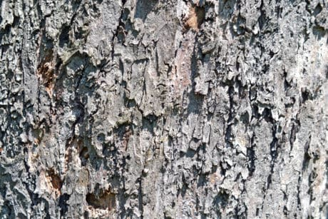 pattern, old, texture, abstract, wood, bark, tree, material