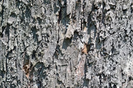 oak, bark, old, pattern, wood, texture, dry, abstract, tree