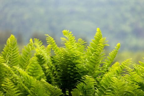 flora, fern, summer, leaf, nature, plant, tree, ecology