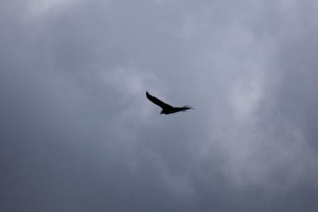 airplane, bird, sky, flight, cloud, air, mist, zoology