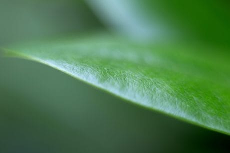 nature, green leaf, flora, detail, shadow