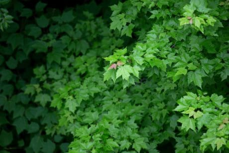 shadow, ecology, nature, wood, leaf, summer, plant, herb, foliage