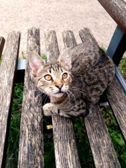 nature, wood, domestic cat, bench, feline, kitten, kitty, pet, fur, whisker