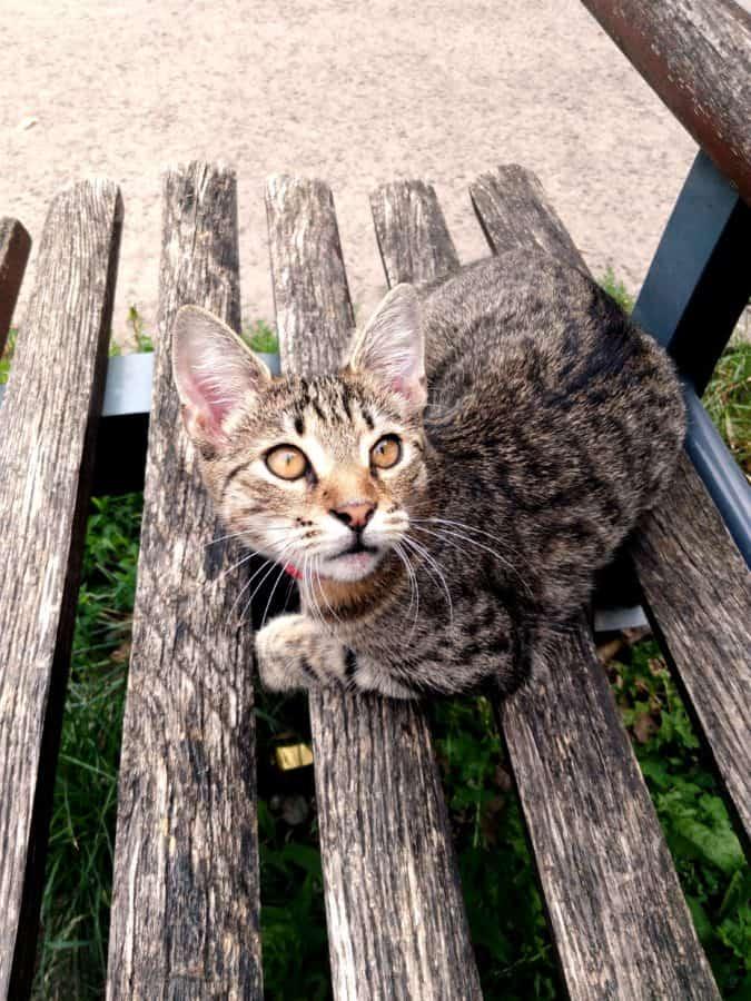 natura, legno, gatto domestico, panca, felino, gattino, gattino, animali, pelliccia, whisker