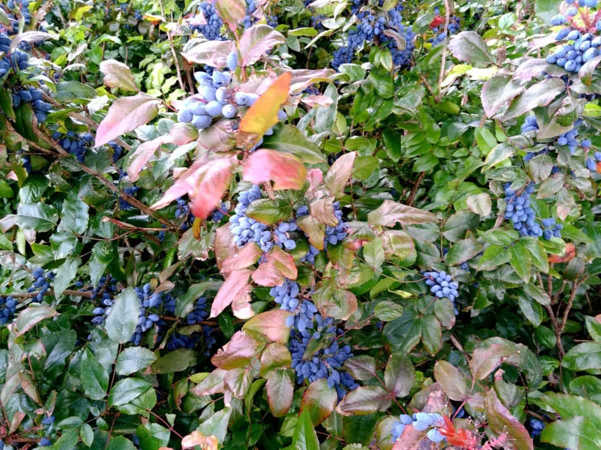 grm, prirode, vrt, cvijet, flora, stablo, list, biljka, biljka