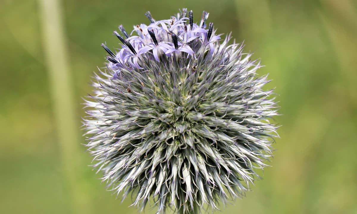 flower, plant, biology, meadow, petal, violet
