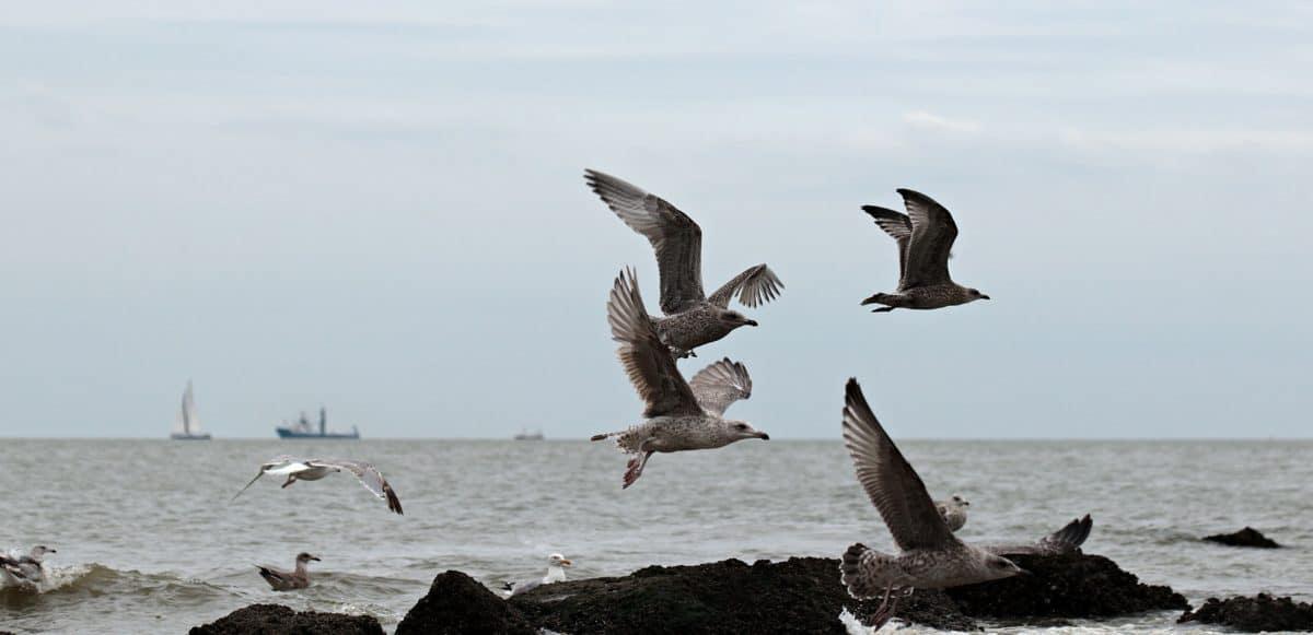 seagull, bird, sea, ship, coast, rock, animal