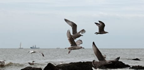 seagull, bird, sea, ship, coast, rock, animal