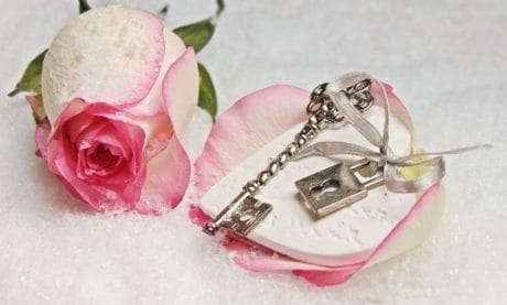 petal, key, plant, pink rose, key, decoration, pink