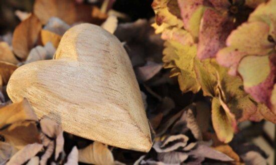 natura, lemn, frunze, toamna, padure, inima, romantism