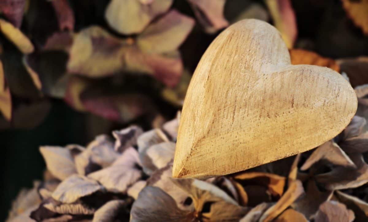 still life, daylight, wood, leaf, heart, art, forest