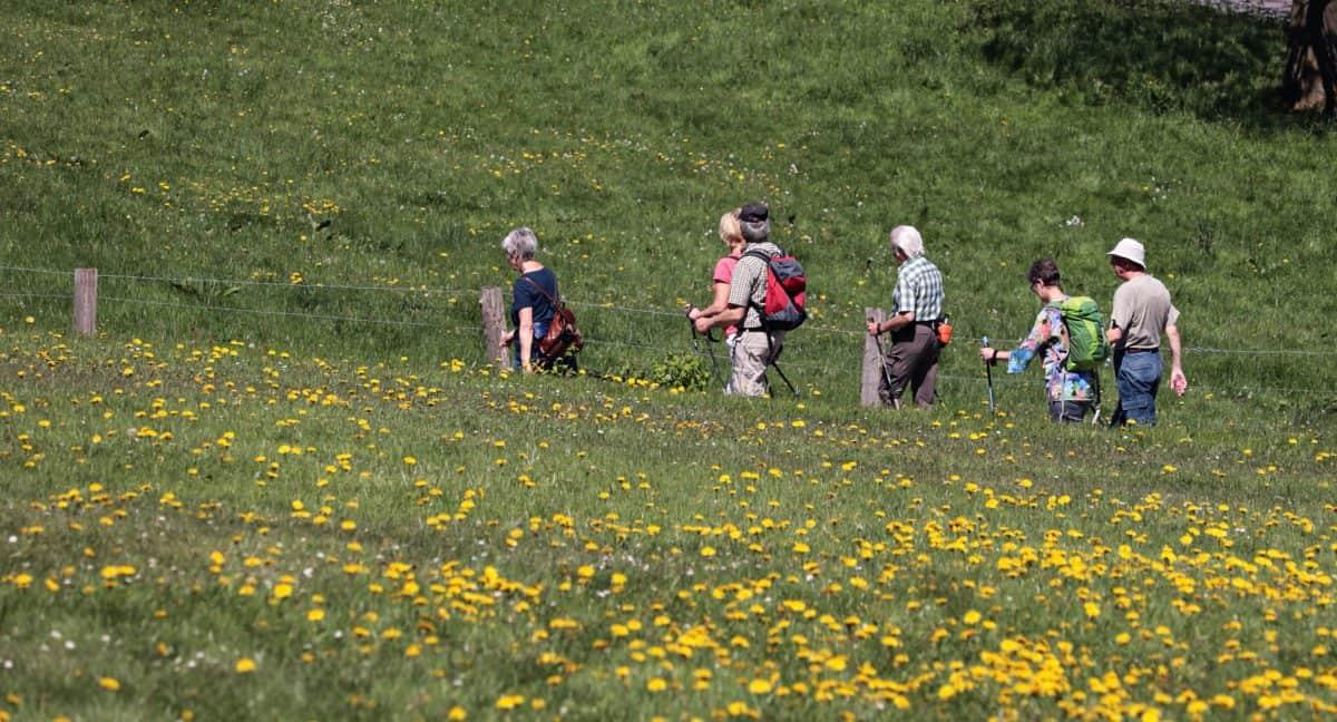flower, plant, meadow, field, people, mountain climbing, nature, landscape