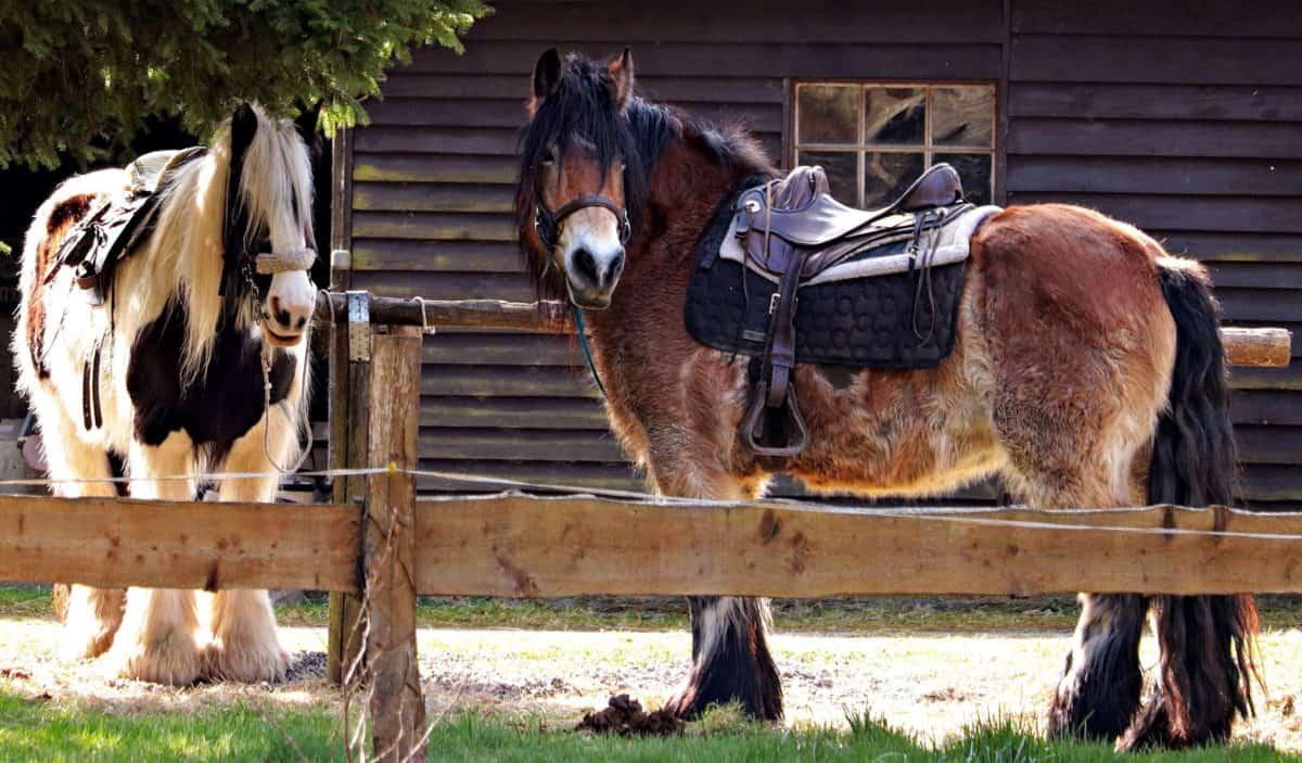 barn, animal, livestock, horse, grass, nature, cavalry, daylight