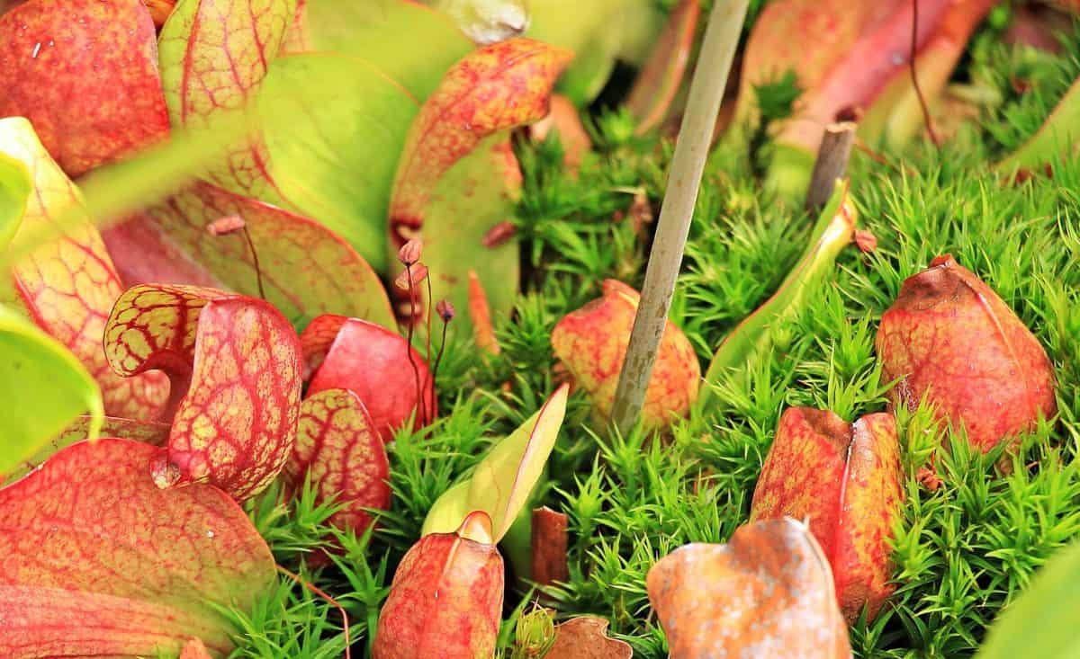zelená tráva, podzim, list, barevné, zelená, bylina, denní světlo