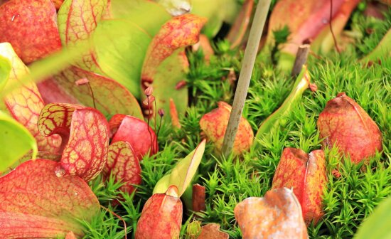 green grass, autumn, leaf, colorful, green, herb, daylight
