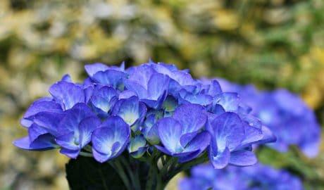 Bahçe, Doğa, çiçek, Leaf, Petal, yaz, bitki