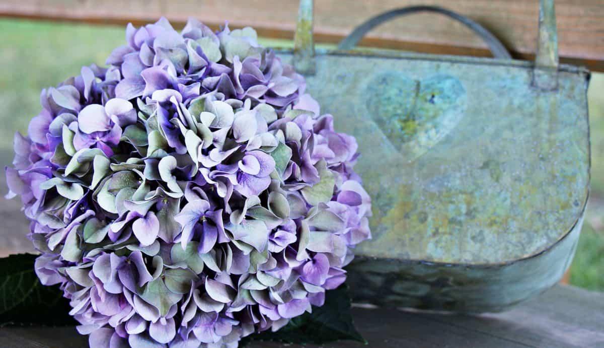 flower, flora, nature, pink, summer, still life, object, plant