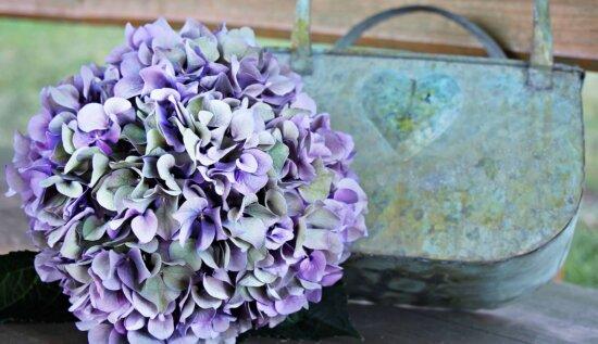 flori, flora, natura, roz, vara, încă de viaţă, obiect, plante