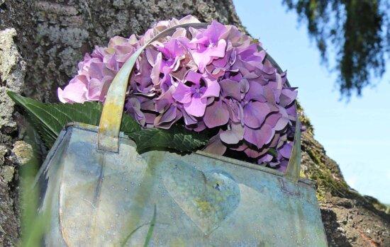natura, flori, frunze, încă de viaţă, obiect, flora, gradina, copac, roz, de vara