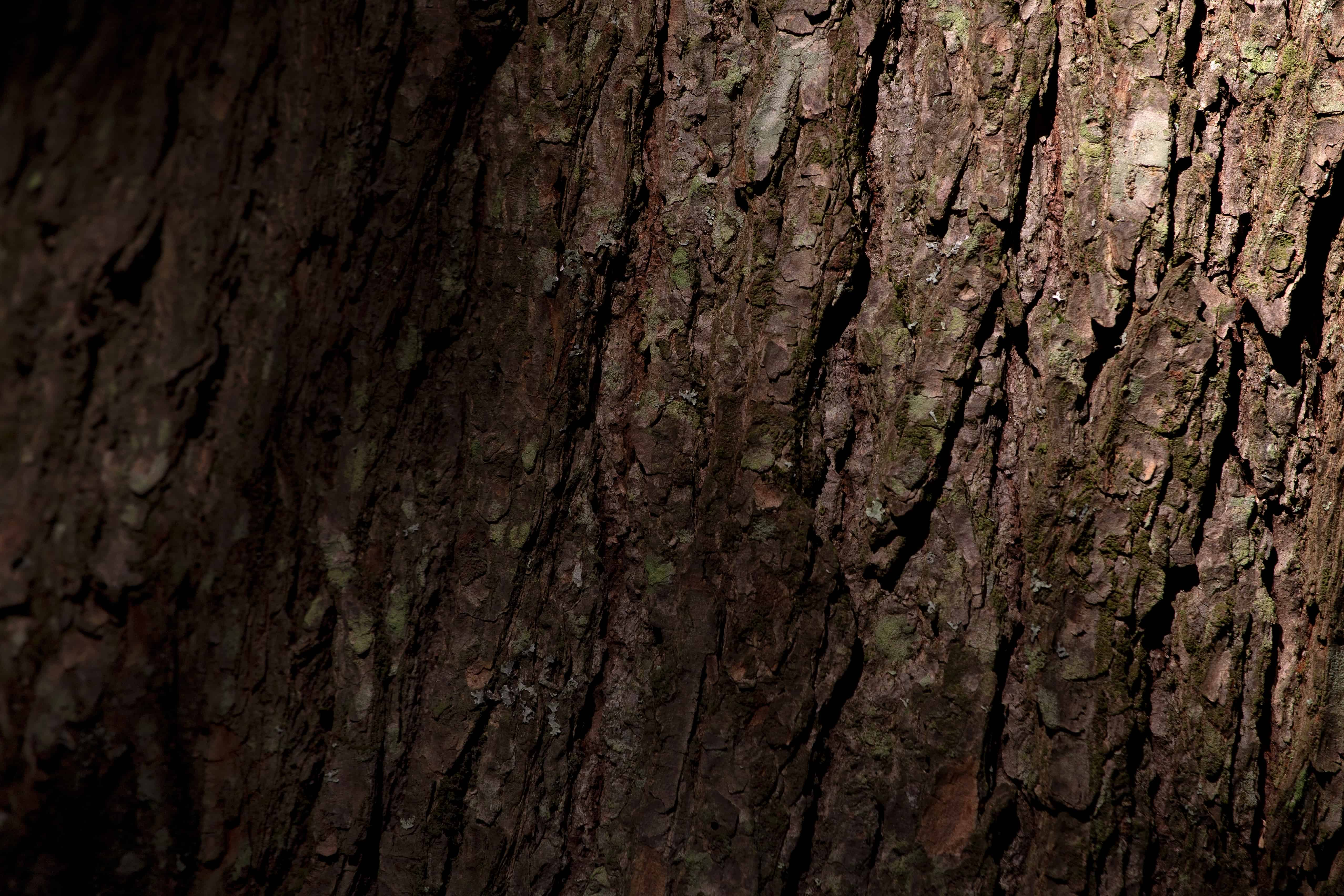 Wood Tree Bark Nature Texture Shadow Material Surface