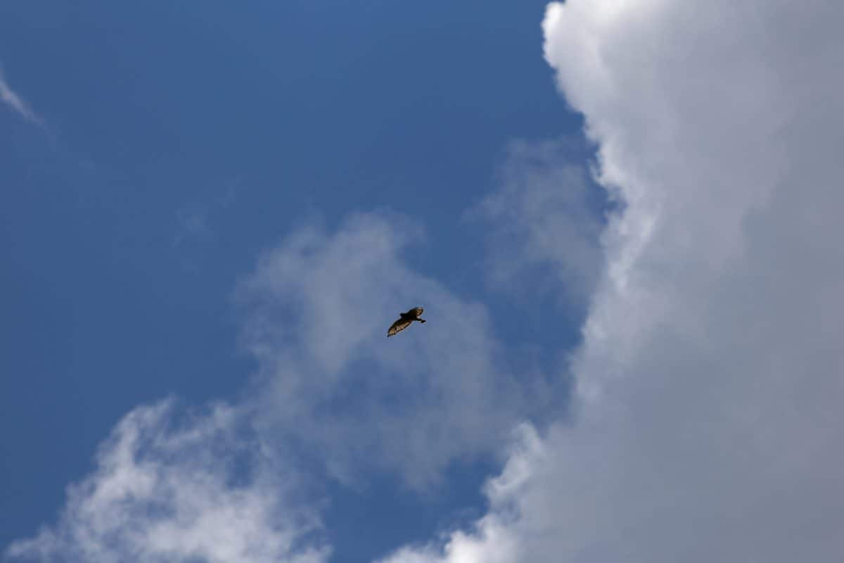 bird, flight, daylight, blue sky, cloud, wind, climate