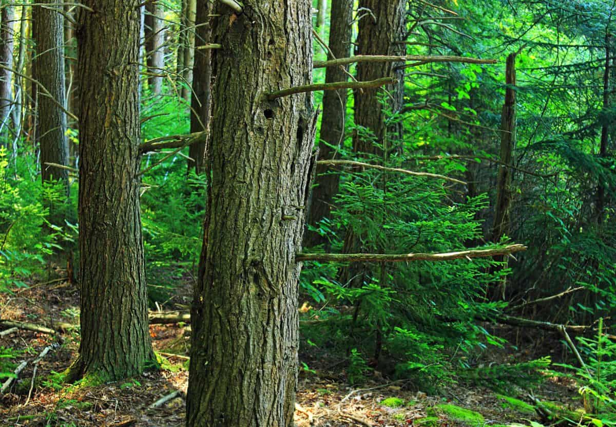 wood, leaf, tree, nature, environment, landscape, green forest
