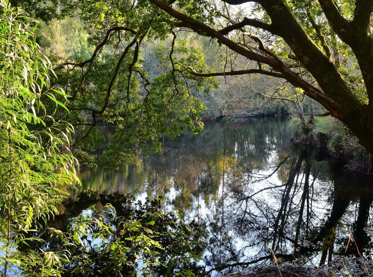 leaf, nature, water, wood, environment, landscape, tree, forest