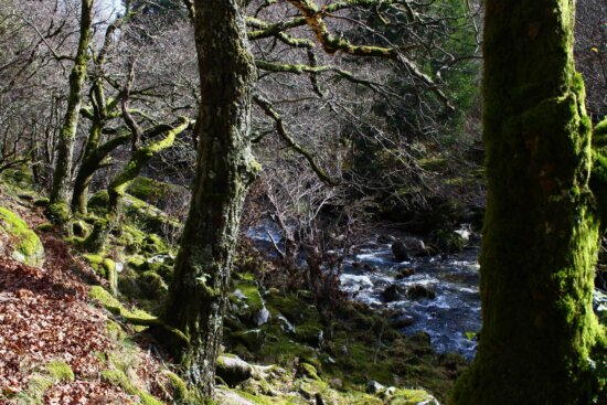 tree, wood, leaf, nature, landscape, moss, water, forest