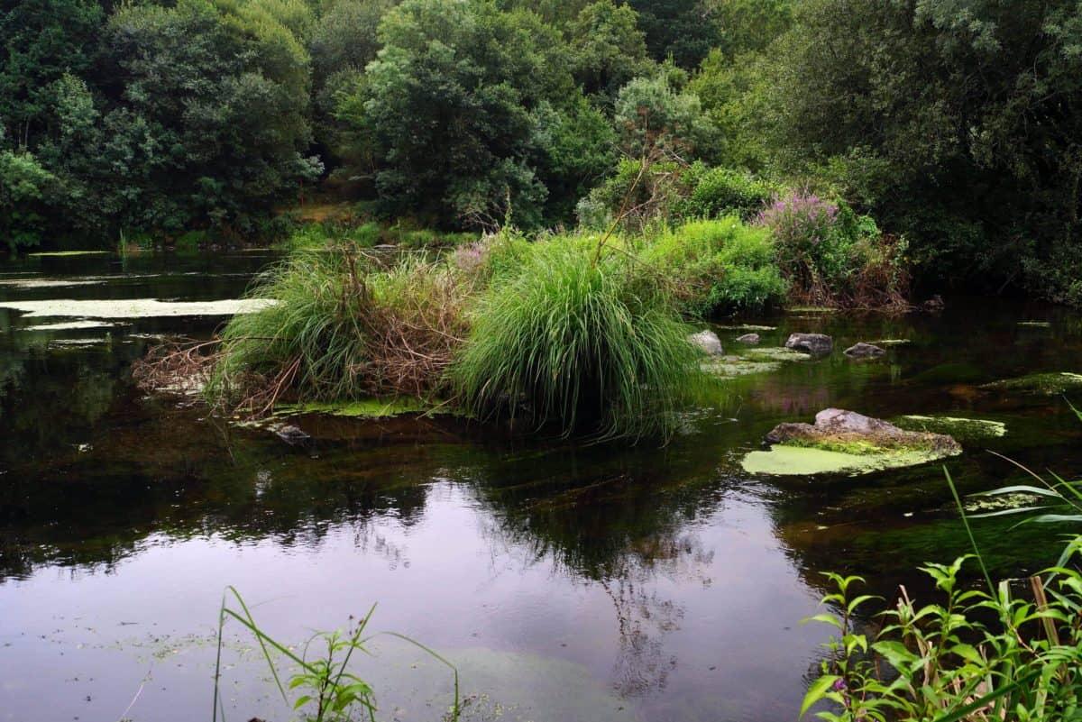 odraz, prirode, vode, krajolik, Rijeka, jezero, drvo, močvara