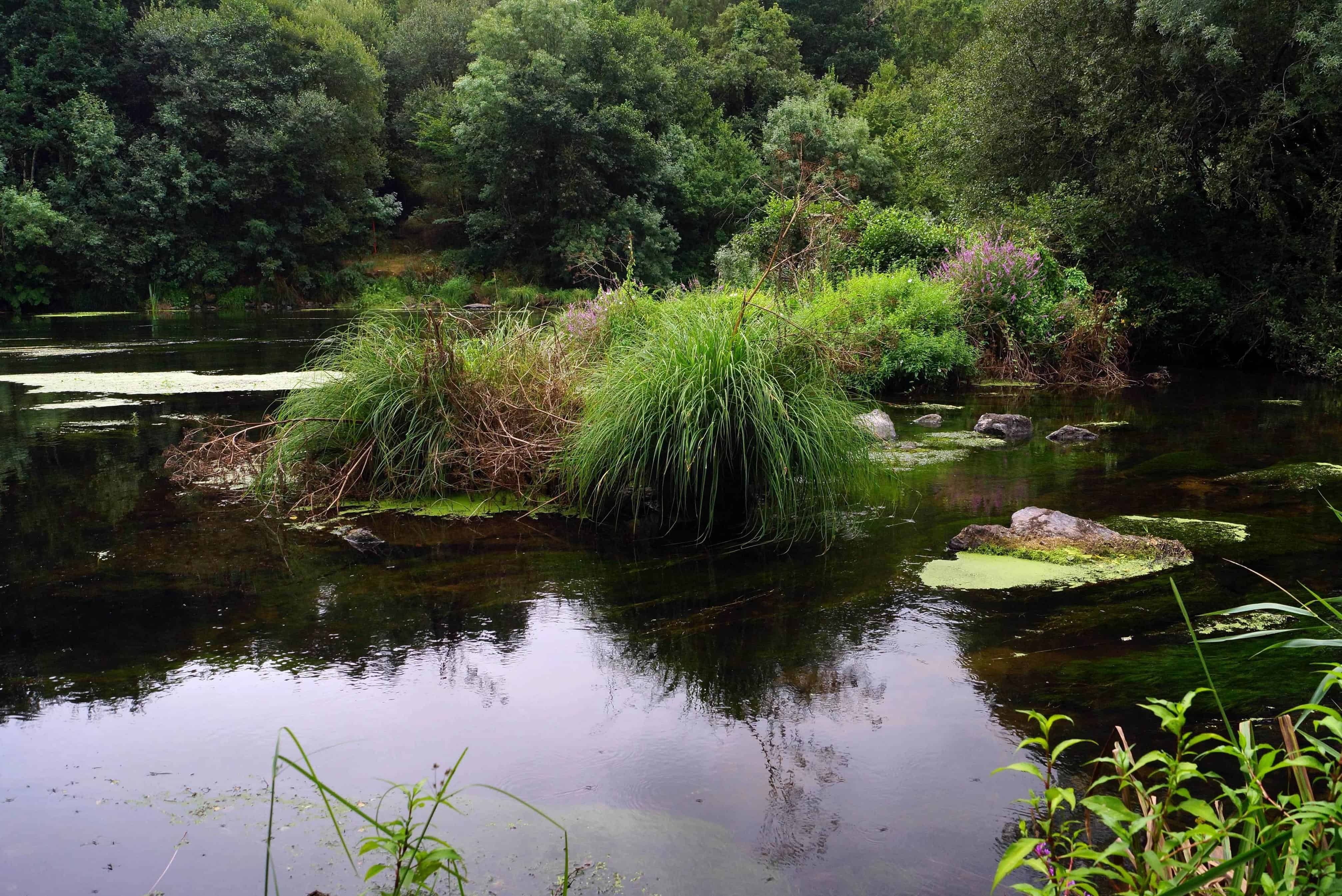 free picture reflection nature water landscape river