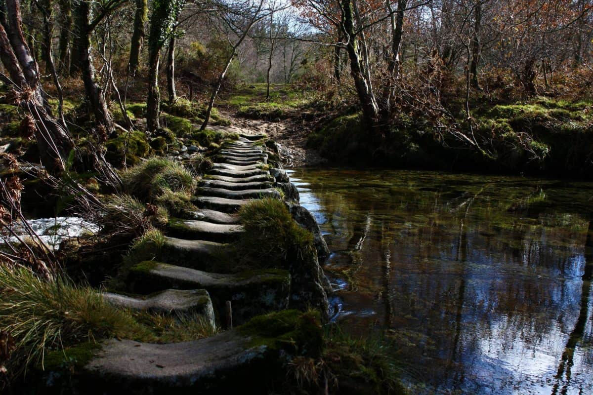river, tree, stream, national park, nature, landscape, moss, water, wood