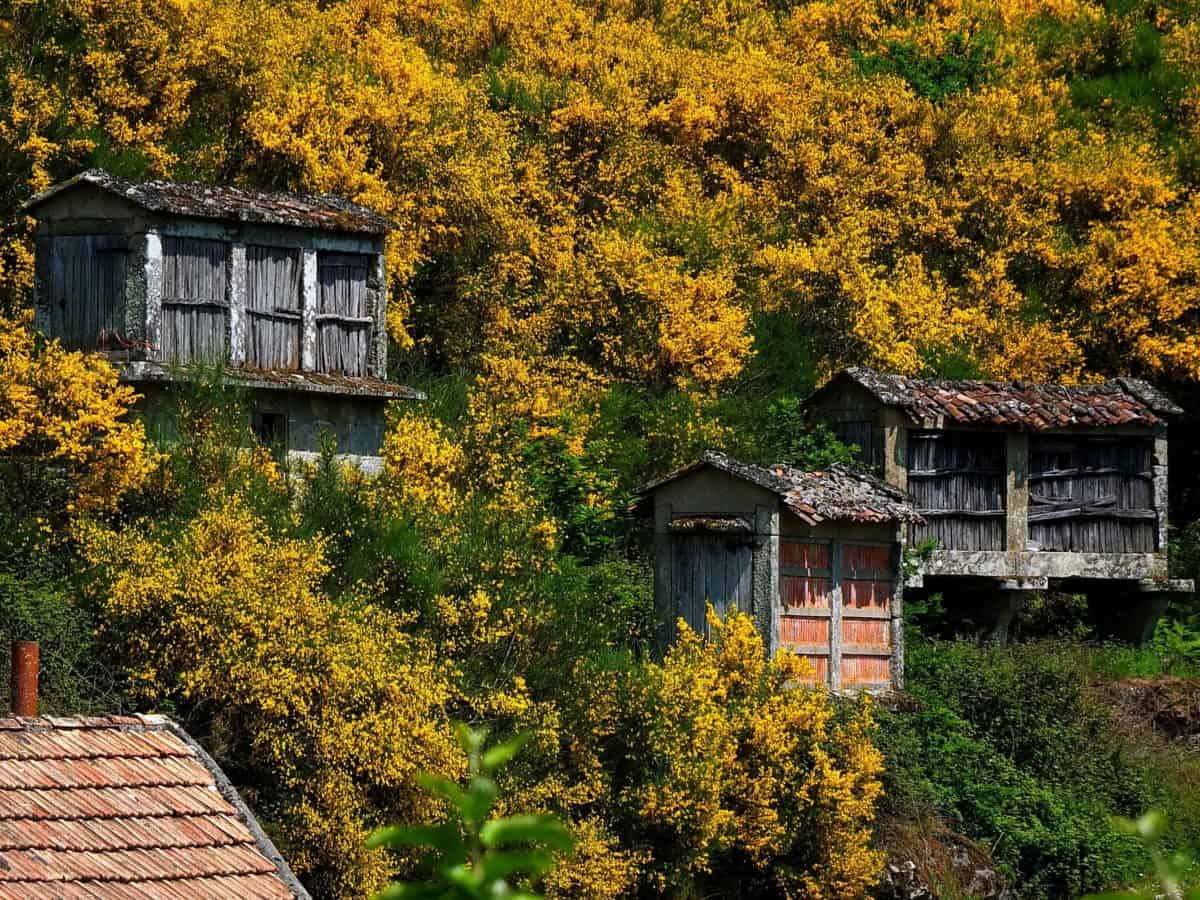 wood, house, rustic, architecture, bungalow, exterior, home