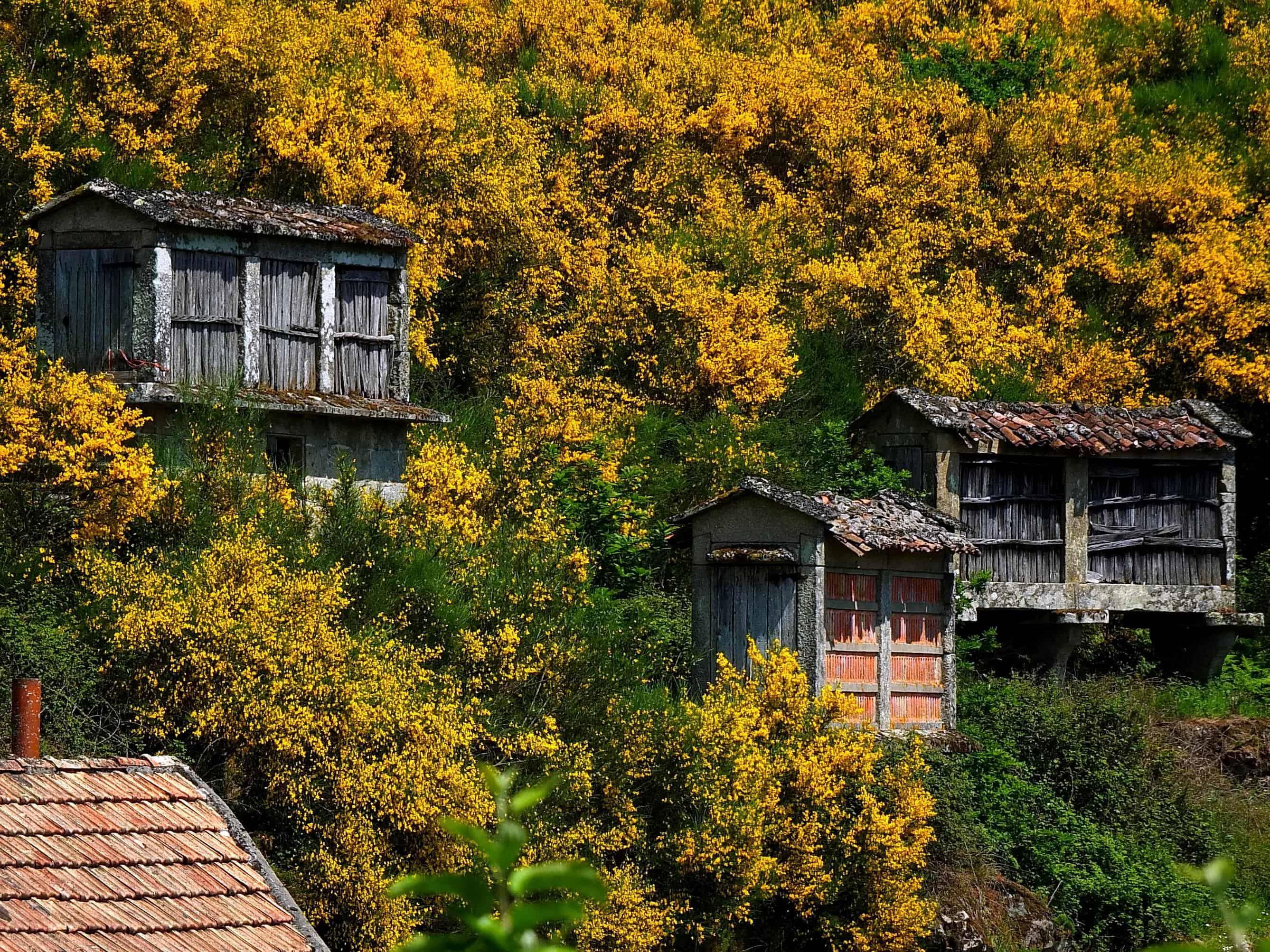 Kostenlose Bild: Holz, Haus, rustikal, Architektur, außen, Bungalow ...