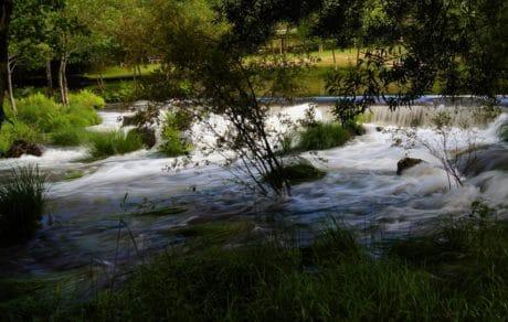 albero, riflessione, flusso, acqua, natura, luce diurna, fiume, paesaggio