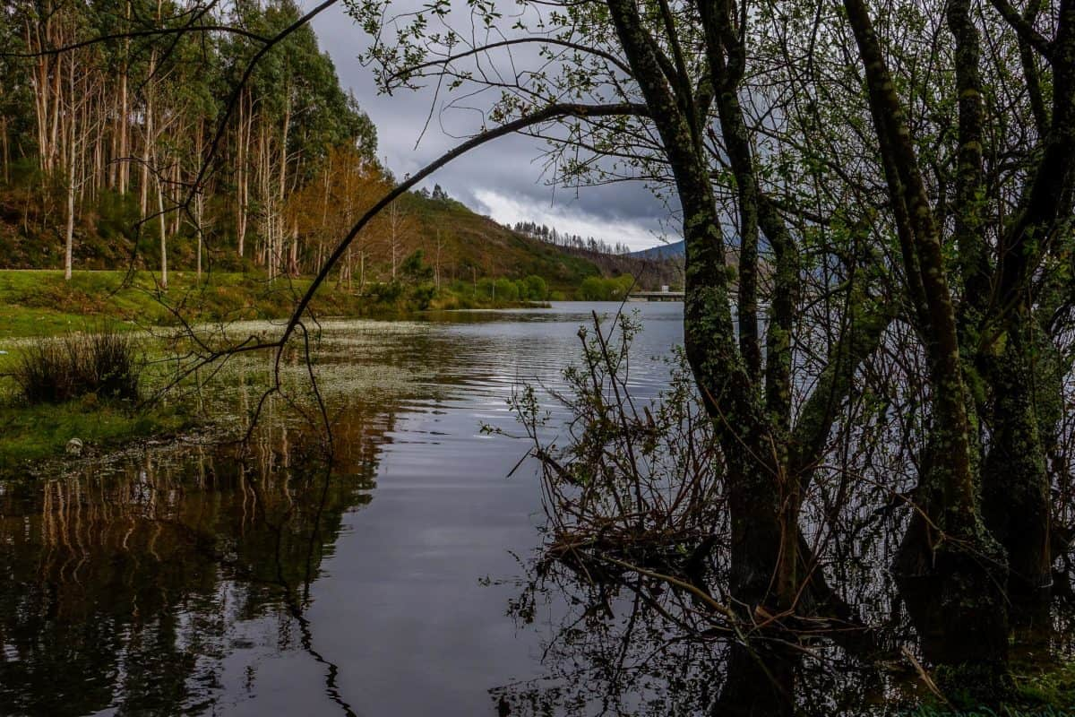 nature, reflection, water, wood, lake, river, tree, landscape