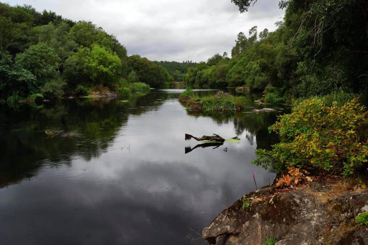wood, landscape, river, lake, nature, water, tree, swamp