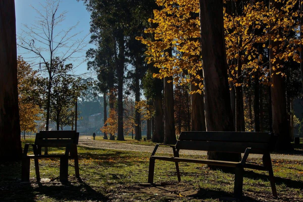 national park, shadow, wood, leaf, dawn, tree, nature, landscape, bench