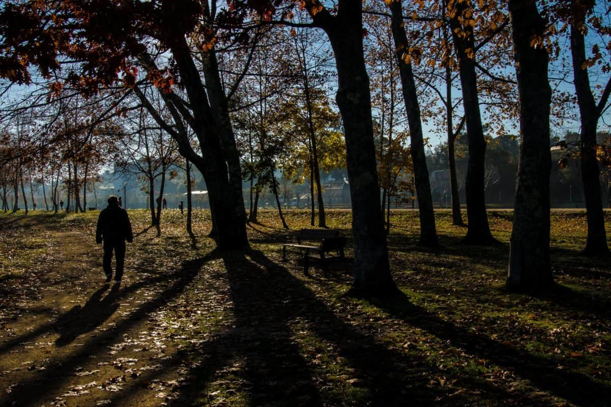 forest, shadow, sunrays, wood, landscape, tree, nature, dawn, leaf, outdoor, grass