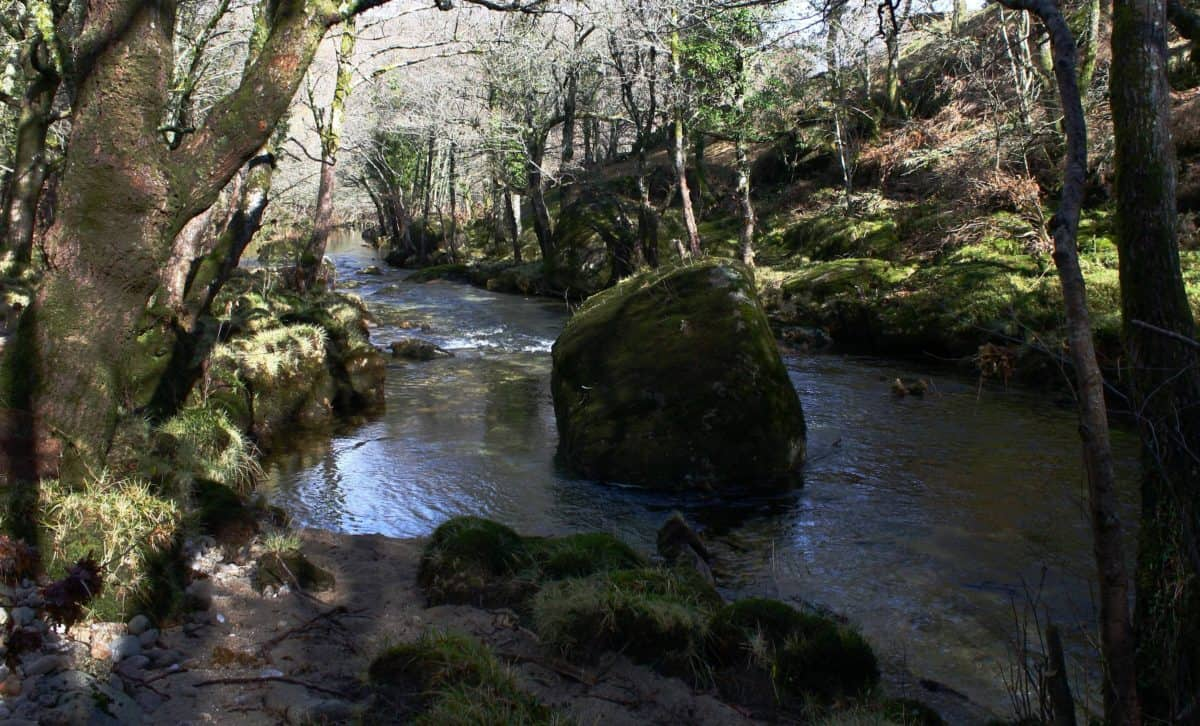stream, nature, water, landscape, river, wood, forest