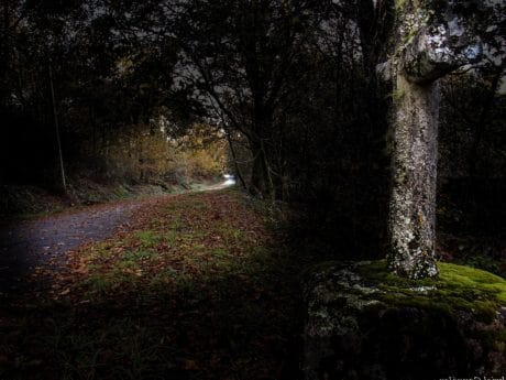 shadow, darkness, road, leaf, tree, moss, landscape, wood, nature, forest, outdoor