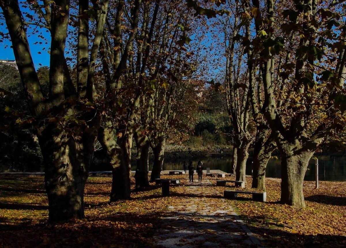 nature, wood, tree, leaf, landscape, shadow, autumn, forest