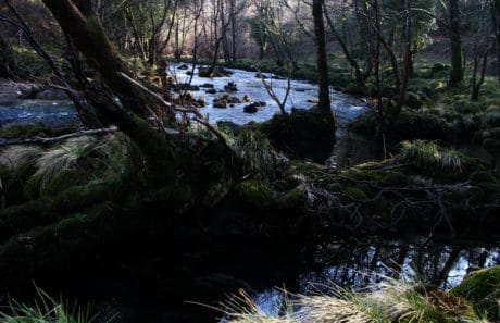treet, elv, vann, strøm, tre, skygge, moss, landskap, natur