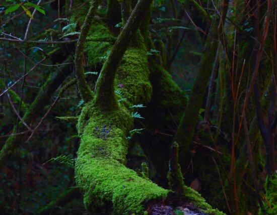 jungle, rain forest, shadow, fern, environment, wood, leaf, tree, rainforest, moss, nature
