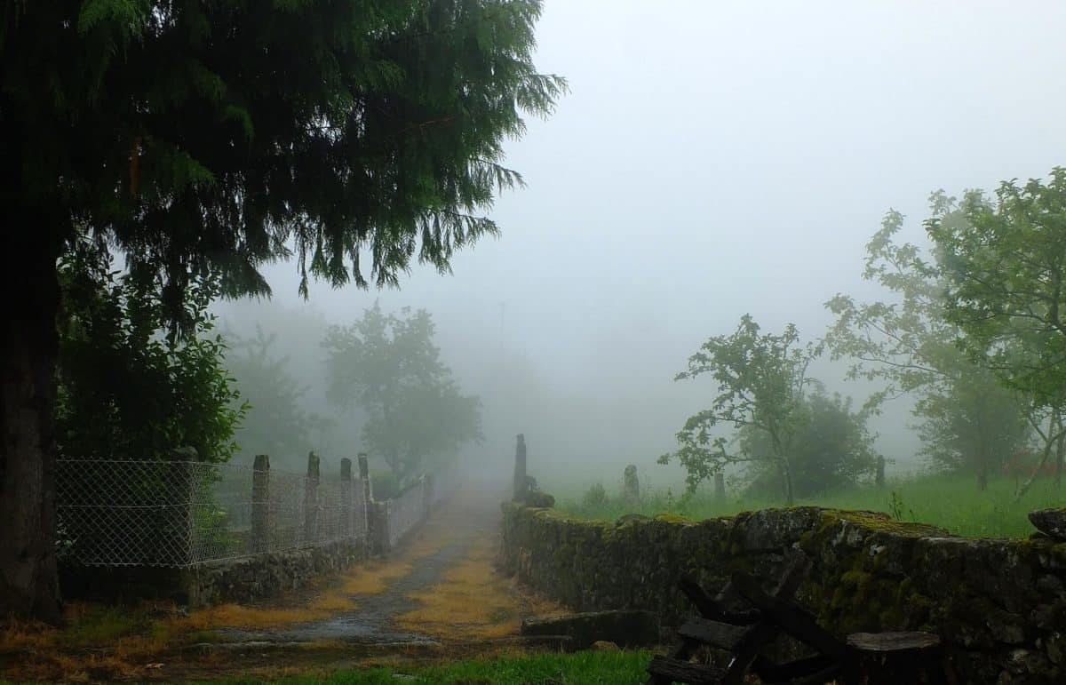 fog, landscape, tree, mist, forest, daylight, grass, moisture, outdoor