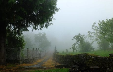 magla, pejzaž, stabla, magla, šuma, ljetno, trava, vlaga, vanjski