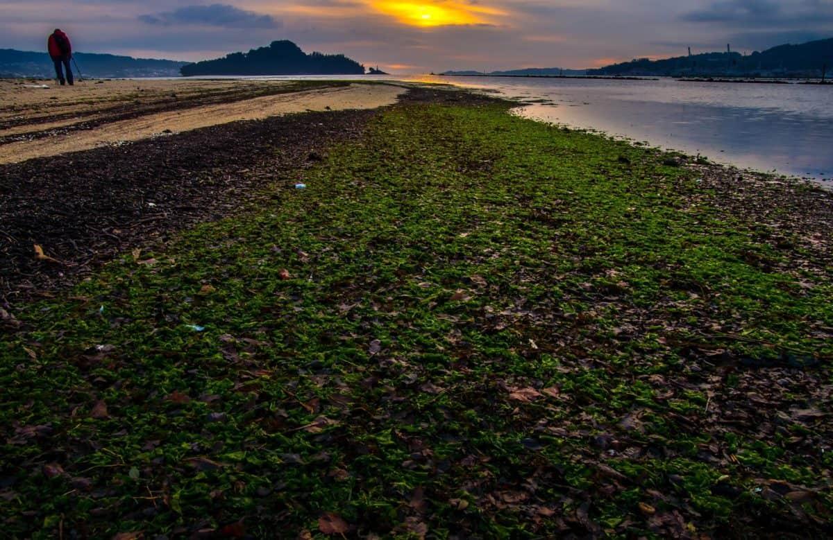 landscape, water, sun, sky, outdoor, daylight, outdoor, grass, dawn