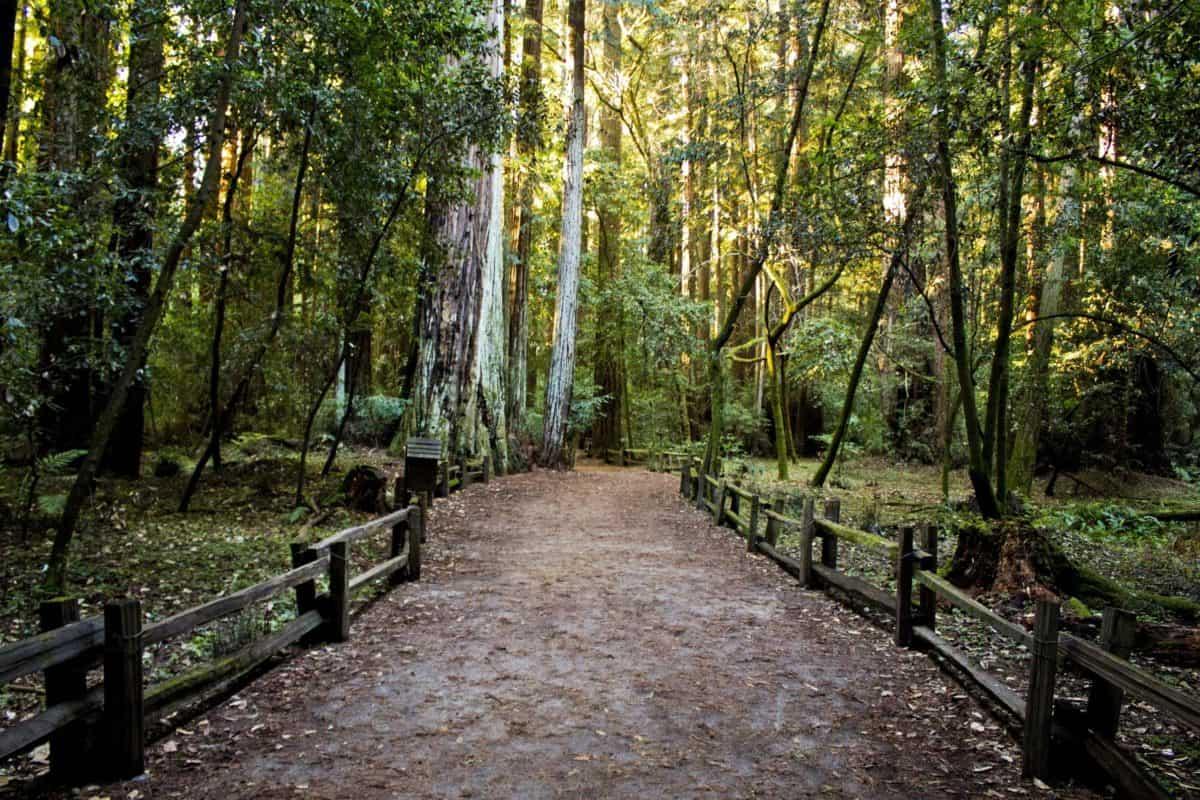 route forestière, paysage, nature, arbre, environnement, sentiers, bois, feuilles, sentier