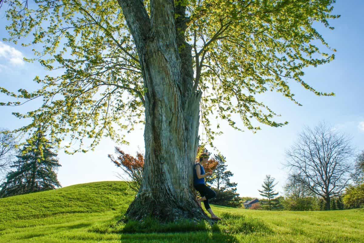 soleil, été, nature, paysage, arbre, bois, herbe, forêt, chêne