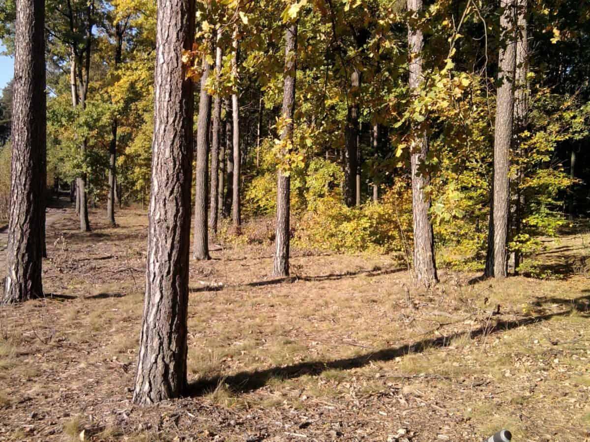 Sunshine, Les, strom, ekologie, listí, příroda, prostředí, krajina, dřevo