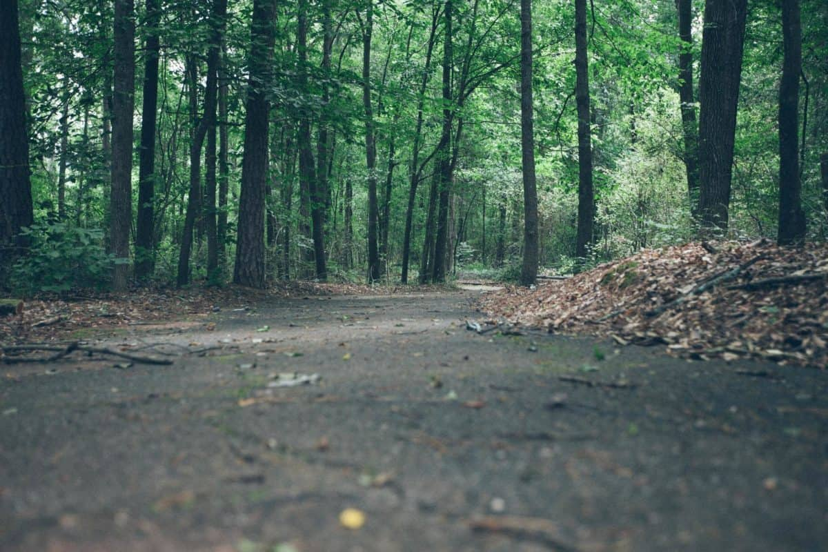 forest pathtree, landscape, wood, environment, leaf, road, nature, forest